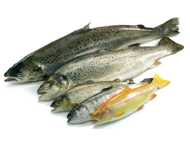 M&J Seafood Case Study