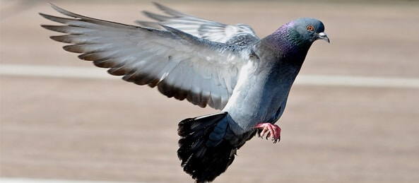 Google Pigeon lands in the UK
