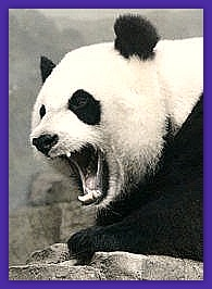 Sleeping Giant Media helping you negotiate Google's Panda update